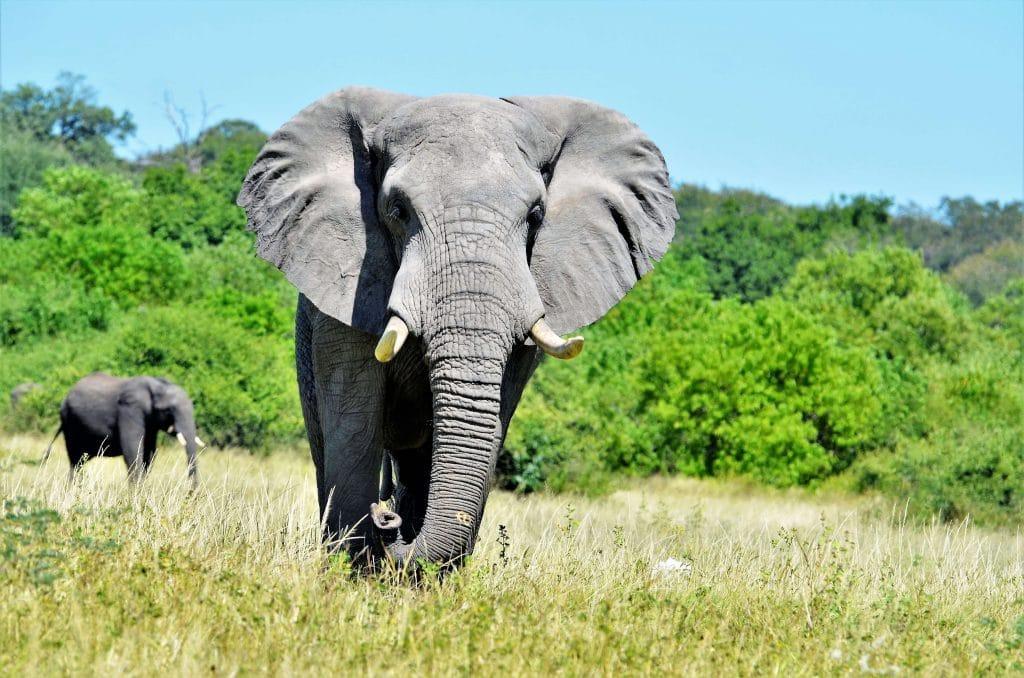 Elefanten fast zum Anfassen nahe