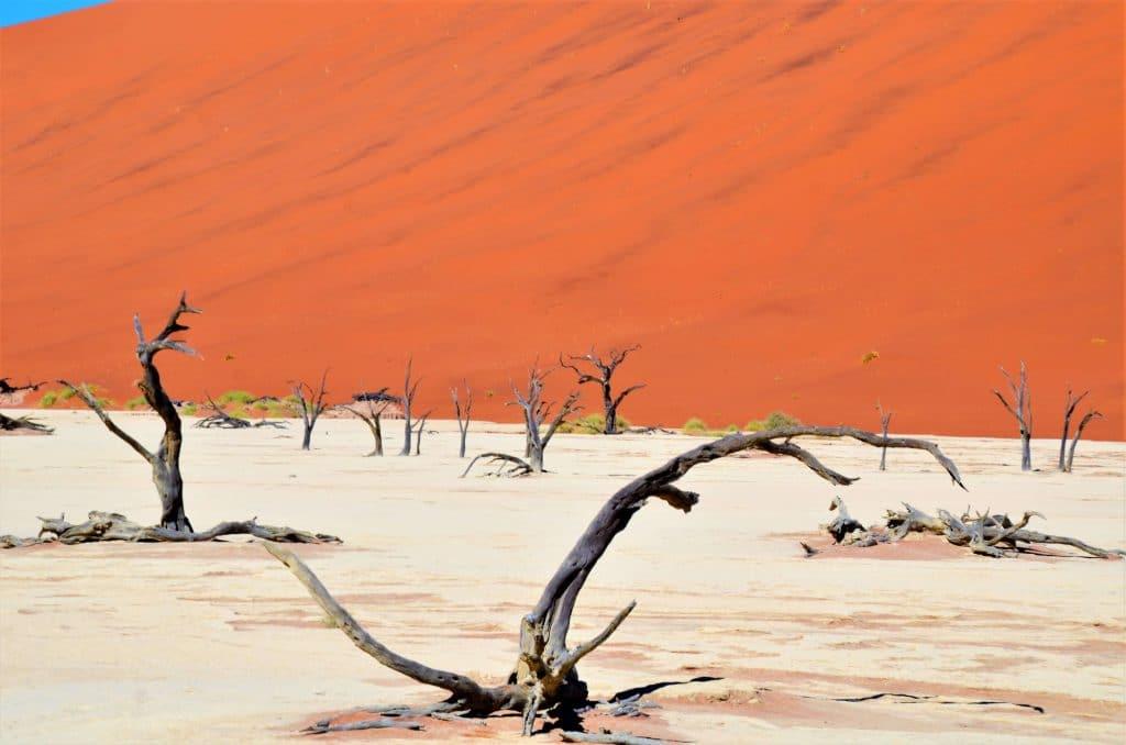 Kameldornbäume im Sossusvlei