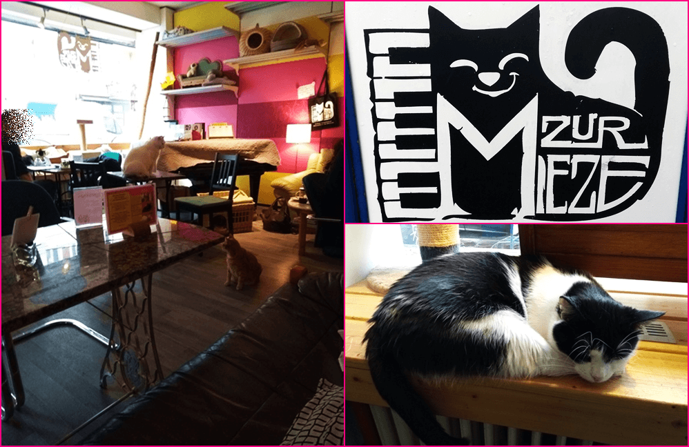 Katzencafe in Berlin Charlottenburg