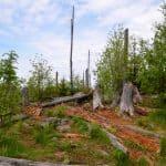 Ausflugstipps & wandern Bayerischer Wald - unterwegs in der Heimat