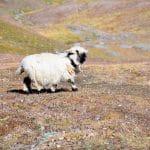 Die Bergbahnen von Zermatt, Wanderung im Paradies
