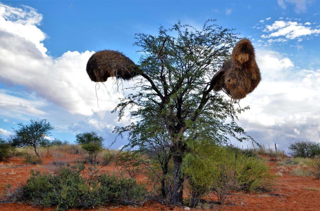 Kalahari Namib Wüste
