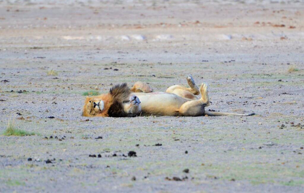 Namibia Etosha Nationalpark Park